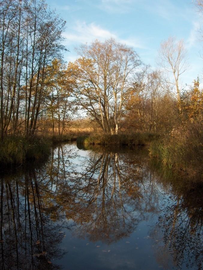 Interessante bespiegelingen bij halte Oost Nederland